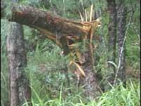 台風16号 被害状況
