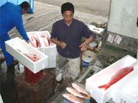 鮮魚の荷捌き及び出荷作業