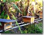 島ハチミツ の瀬堀養蜂園(養蜂所)