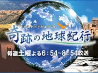 BS朝日「ネイチャードキュメント 奇跡の地球紀行」小笠原 クジラ
